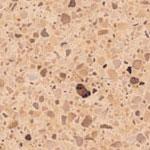 savannah countertop coloring for granite